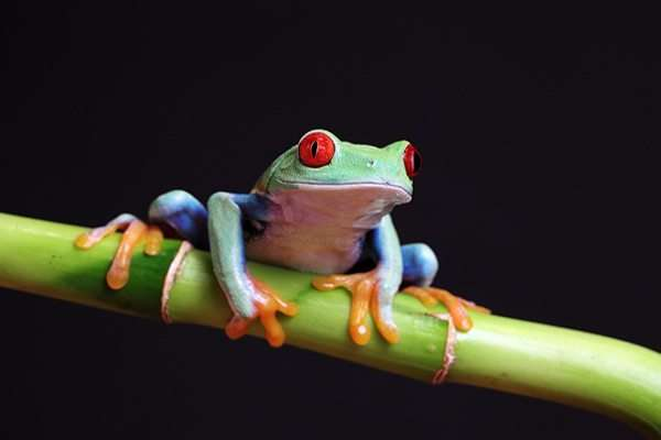 frog colored amazing animals