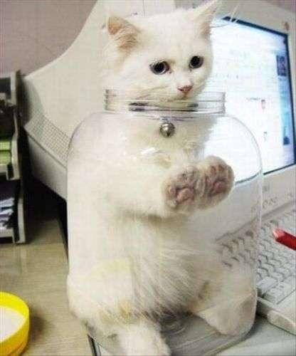 buffo gatto bloccato