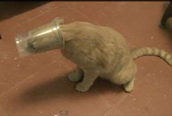 Foto gatti divertenti Stuck (12)