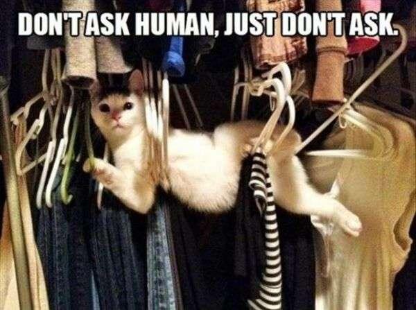 chiedere gatto umana