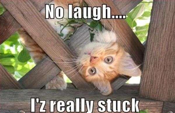 No risata! funny cat