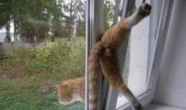 Stuck-funny-cats