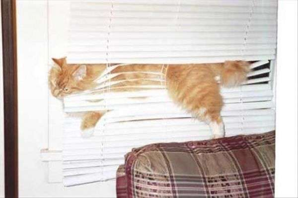 gatto idiota
