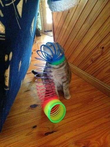 Immagini Bloccato gatti divertenti (8)