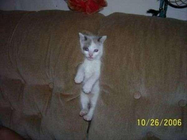 Immagini Bloccato gatti divertenti (9)