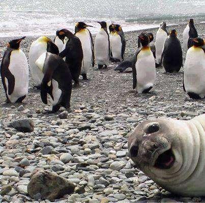 Selfie animals