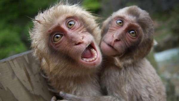 Monkeys small