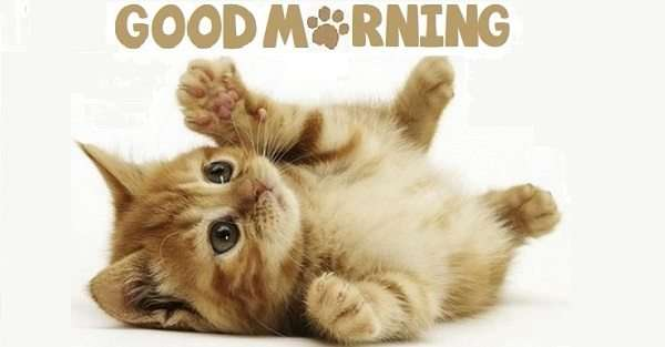 "Good Morning images with ""cat"" for WhatsApp, Facebook, Pinterest..."