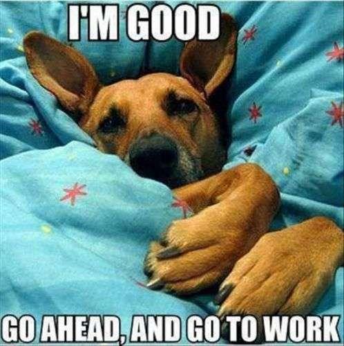 funny dog morning
