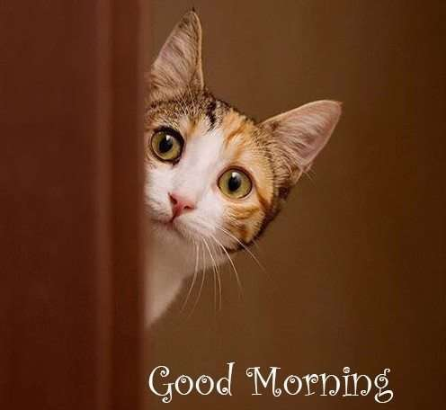 good morning images free with cats