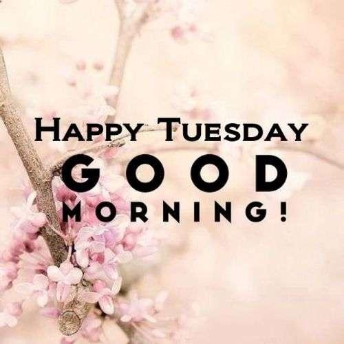 Good Morning Tuesday Pics Goodmorningpicscom