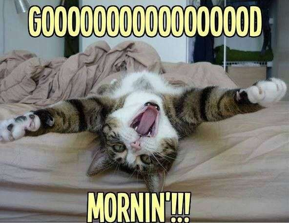 Goodmorning with cat - funny | goodmorningpics.com