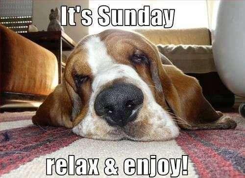 It's sunday - funny dog