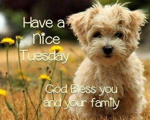 Nice Tuesday