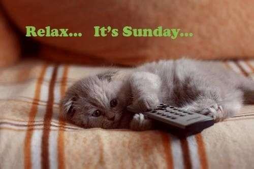 cat sunday