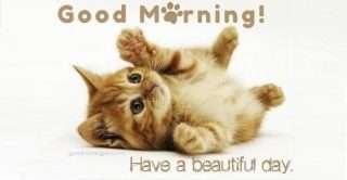 good-morning-pics-cats