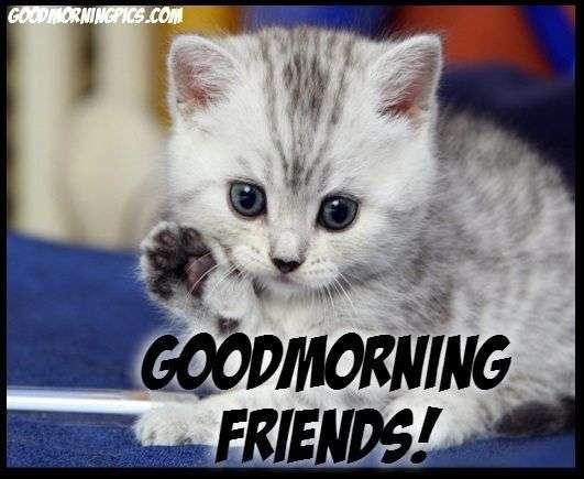 cute-kitten-saying-goodmorning
