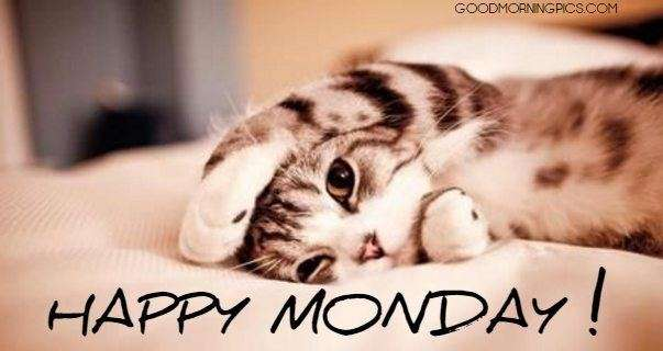 Happy monday with cute cat