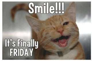 Friday funny images cat