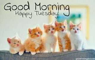 happy tuesday with adorable kittens