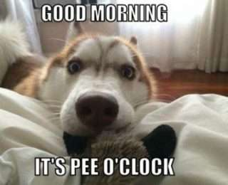 Good Morning Funny Pics Goodmorningpicscom