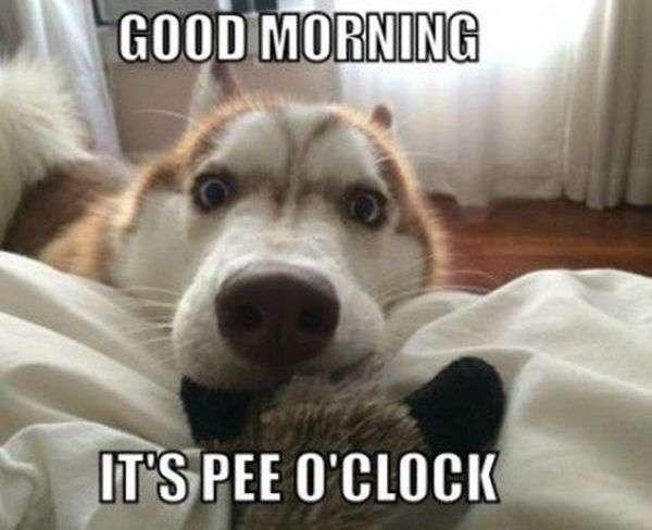 Funny-goodmorning