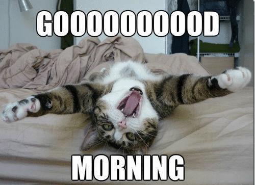 Funny_Good_Morning