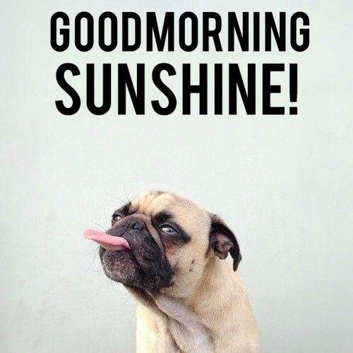 Good Morning Meme Dog : Goodmorning sunshine goodmorningpics