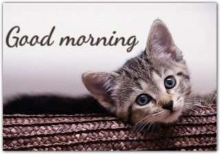 Good morning images with beautiful kitten-cat