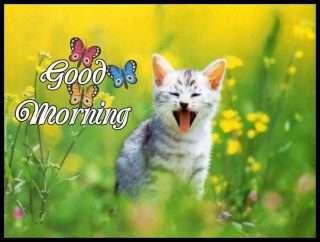 Good Morning Funny Pics Goodmorningpicscom