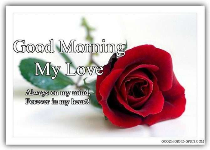Good Morning My Lovesweetheart With Rose Goodmorningpicscom