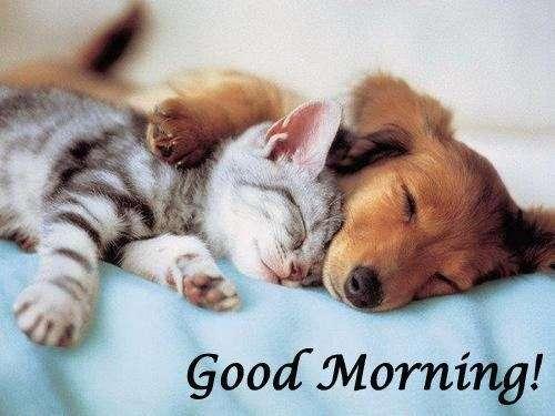 good morning animals