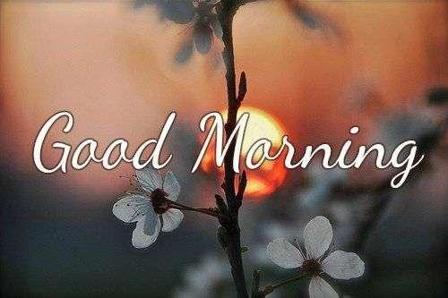 Good Morning With White Flower Goodmorningpics