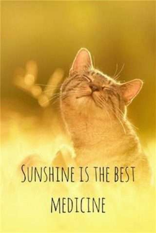 good-monring-quotes-cat