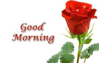 Good Morning Pics Red Roses Images And Quotes