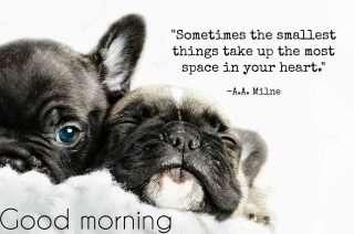 morning phrases
