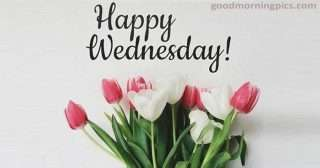 wednesday-flower