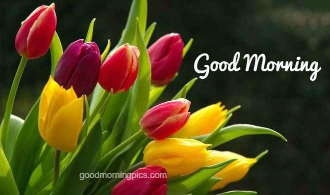 Good Morning Love Pics | goodmorningpics com