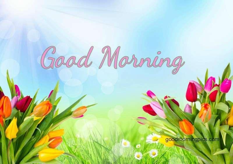 Good morning with flowers (16 Pics) | goodmorningpics.com