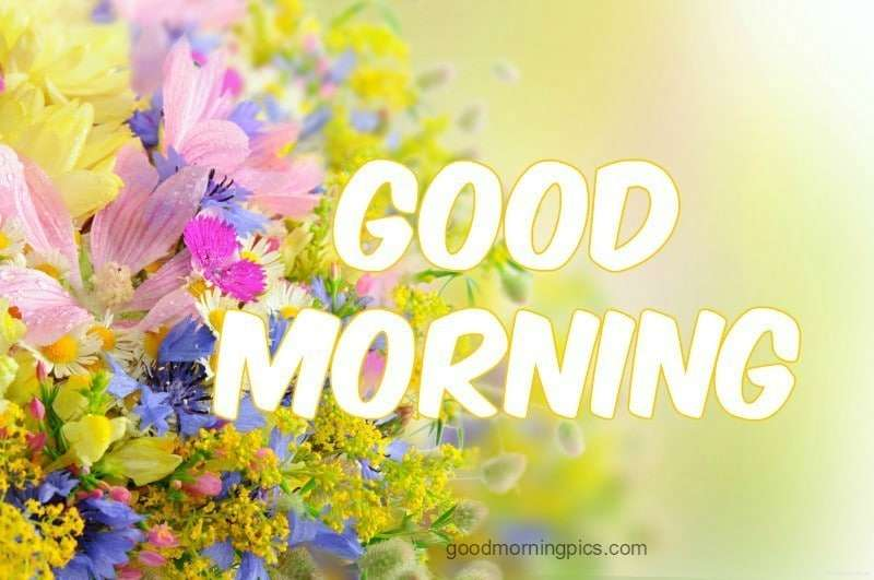 """Good Morning Orange Flowers : Search results for """"beautiful pics whatsapp"""