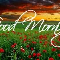 wallpaper-goodmorning-flowers
