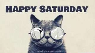 Happy Saturday Cat
