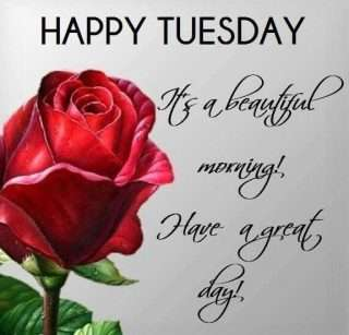 happy tuesday rose