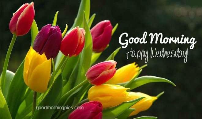 Good Morning Wednesday Pics & Quotes | Goodmorningpics.com