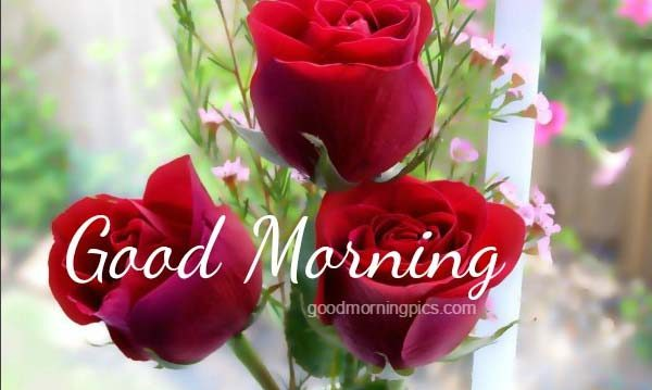 Good morning beautiful flower wallpaper the best flowers ideas garden - Plants for every room in your home extra comfort and health ...
