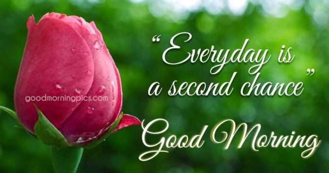 Flowers quotes motivational good morning