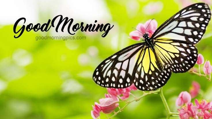 Good Morning Whatsapp Pics Goodmorningpics Com
