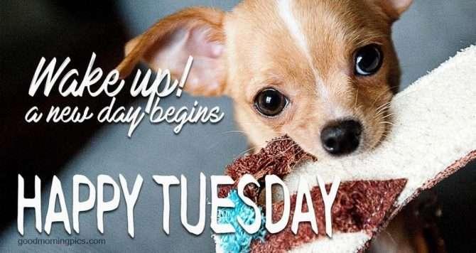 Happy Tuesday image wake up