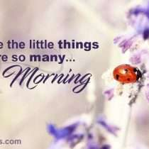 Good morning: Appreciate the little things...