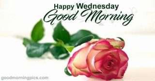 Good morning wednesday flowers (4)
